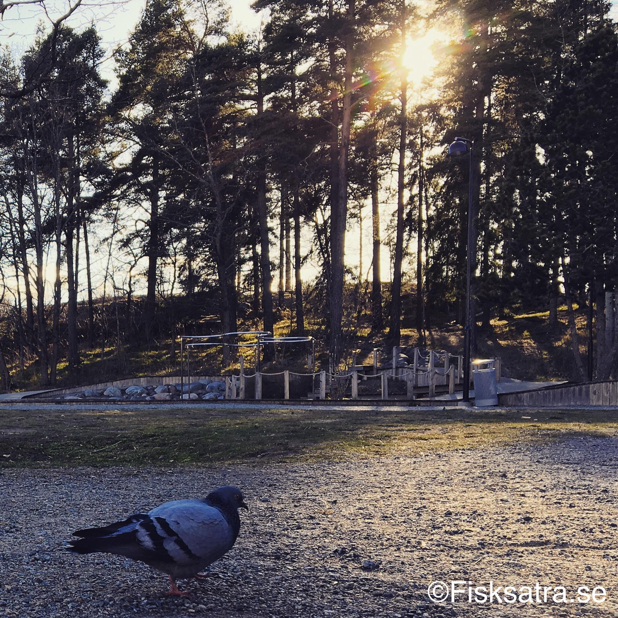Lekpark i Fisksätra