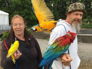 Fåglar på Internationella Festen i Fisksätra