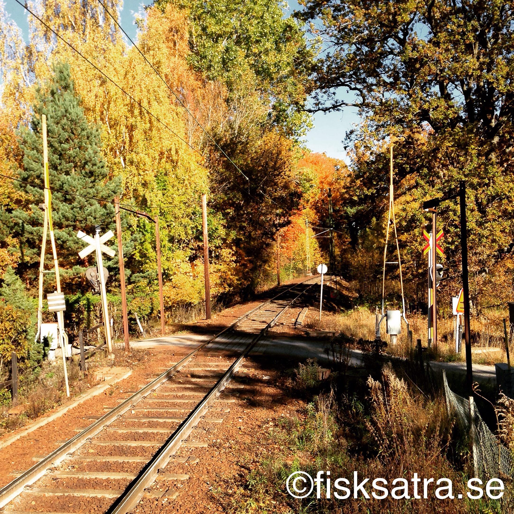 """En höst på """"landet"""" en station från centrala Fisksätra"""